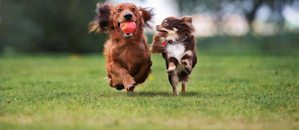 Стало известно, как собаки влияют на здоровье людей