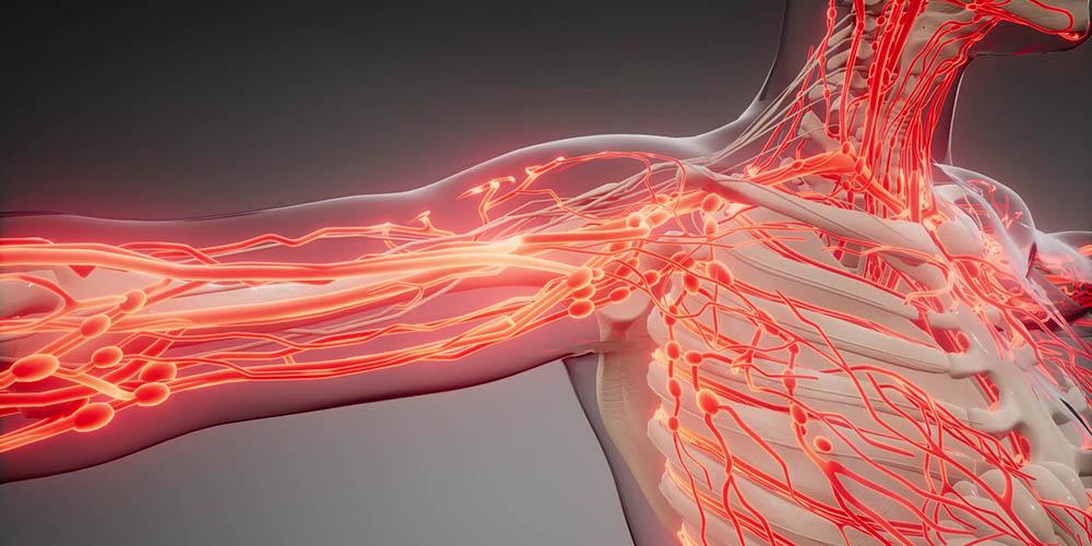 У женщин кровеносные сосуды стареют быстрее, чем у мужчин