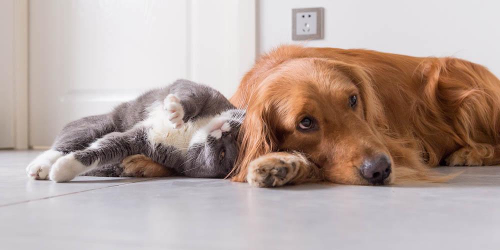Наука доказала, что домашние животные полезны для здоровья человека
