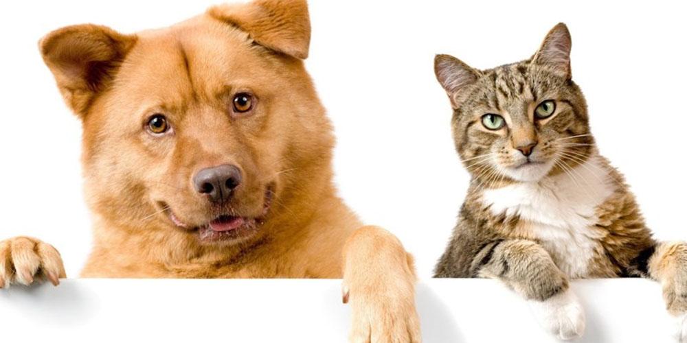 Заражаются ли кошки и собаки коронавирусом?