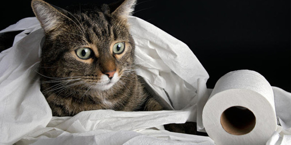 5 причин, почему из-за коронавируса туалетная бумага стала дефицитом