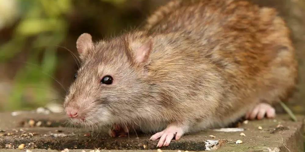 Вирусы животных: безопасны и опасны для людей