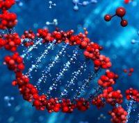 Американские ученые обнаружили ген, отвечающий за чувство поддержки в паре
