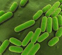 Пациентов с COVID-19 нужно тестировать на бактерии и грибки, а не только на коронавирус