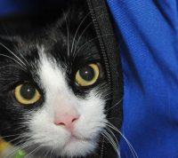 Ветеринары советуют в период самоизоляции не выпускать котов из дома
