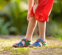 Комары: какие инфекции они переносят в Украине