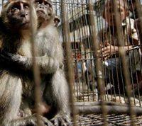 Пандемия коронавируса стала переломным моментом в борьбе с мировой торговлей дикими животными