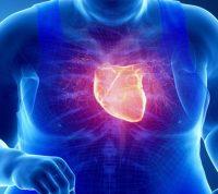 Жировые «запасы» у сердца возникают из-за сахара