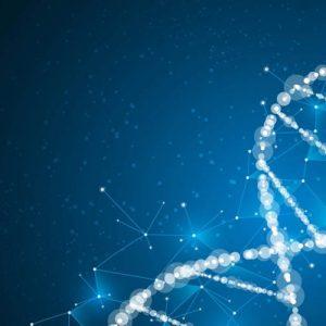 Обнаружили ген, благодаря которому люди остаются стройными всю жизнь