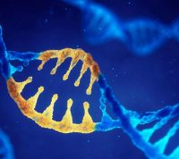 Отключение «мусорной ДНК» может влиять на формирование нейронов