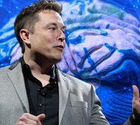Илон Маск представил чип, который будут имплантировать в мозг человека