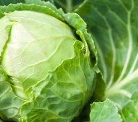 Витамин К и капуста спасут от инсульта