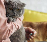 Домашние животные могут улучшить иммунитет своих владельцев