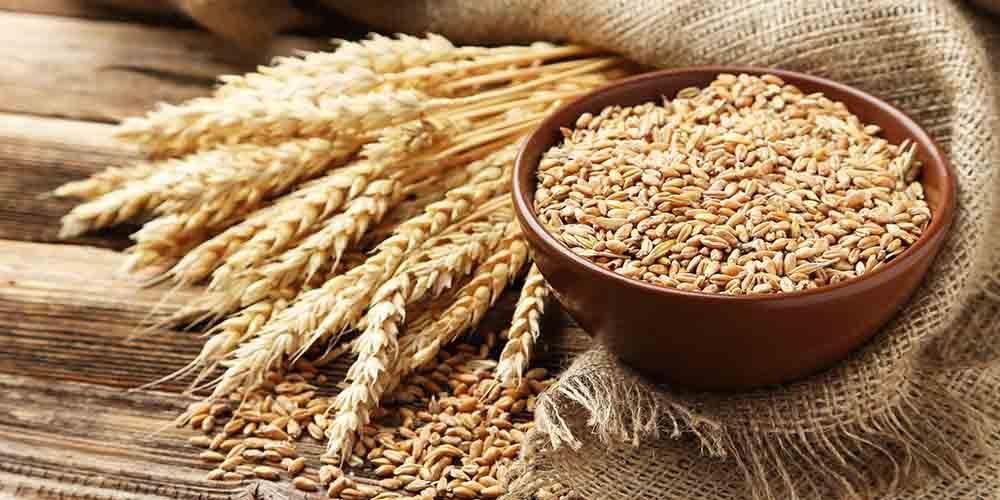Раннее введение значительного количества пшеницы в рацион ребенка до полугода может предотвратить развитие глютеновой болезни