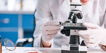 Родственные краснухе вирусы обнаружены в Уганде и Германии