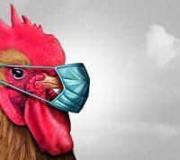 На порозі нової пандемії? Пташиний грип нагадав про себе