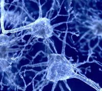 Ученые сомневаются в связи коронавируса с болезнью Паркинсона