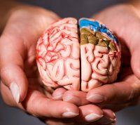 Ученые предположили, что у одиноких людей структура мозга отличается