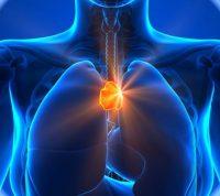 Вилочковая железа отвечает за успешное протекание беременности