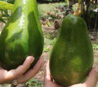 Ежедневное употребление авокадо улучшит работу кишечника