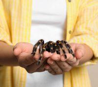 Многие виды фобий можно полностью вылечить, но этот процесс зависит от многих факторов