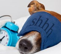 Для того, чтобы успешнее восстановиться после травмы, надо больше спать