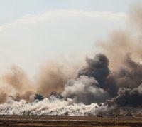 Дым от пожаров может переносить инфекционные и грибковые заболевания