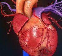 Здоровые сердце и сосуды могут предотвратить или отсрочить деменцию