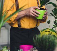 Домашние растения помогают легче переносить изоляцию и карантин