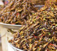Съедобные насекомые все еще не могут стать частью рациона в западных странах