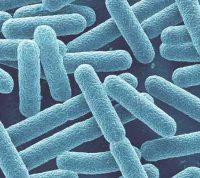 Группа ученых утверждает, что для успешного похудения важен состав бактерий в кишечнике, а не питание и гены