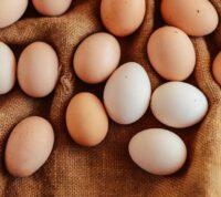 Куриные яйца: польза и вред для здоровья