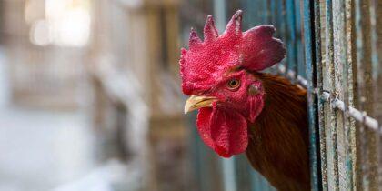 В РФ выявлен первый в мире случай инфицирования человека гриппом H5N8