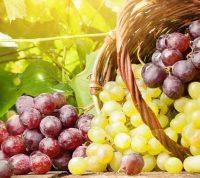 Виноград защищает кожу от УФ-излучения