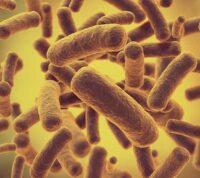 Ученые выяснили, что бактерии меняют форму, чтобы избежать влияния антибиотиков