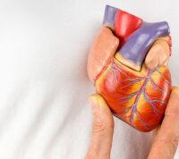 Избыток свободного железа в организме может спровоцировать сердечную недостаточность