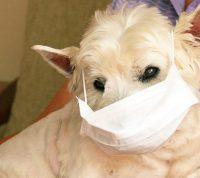 Эксперты советуют хозяевам, которые больны Covid-19, избегать тесного общения с домашними животными