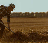 У фермеров на 46% выше вероятность развития деменции