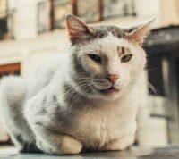 Найдена предварительная связь между инфекцией, распространяемой кошками, и шизофренией