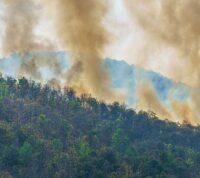 Дым от лесных пожаров провоцирует кожные заболевания