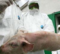 У Вісконсині підтвердили випадок захворювання на новий вид свинячого грипу