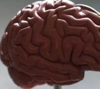 Ученым удалось напечатать на принтере живой мини-мозг