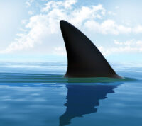 Технологии спасут людей от нападения акул