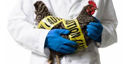 Эксперты считают, что птичий грипп может вызвать новую пандемию