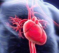 Ученые выяснили, почему рубцы на сердце после инсульта вызывают нарушение сердечного ритма