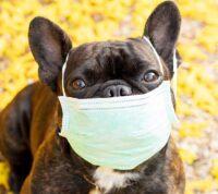 Обнаружен коронавирус, передающийся человеку от собак