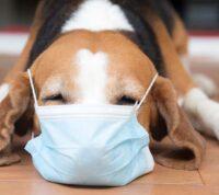 От коронавируса начали прививать животных