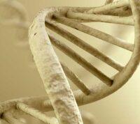 SARS-CoV-2 может внедряться в человеческий геном - ученые
