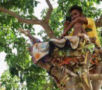 Студент провел самоизоляцию на дереве, чтобы не заразить близких коронавирусом