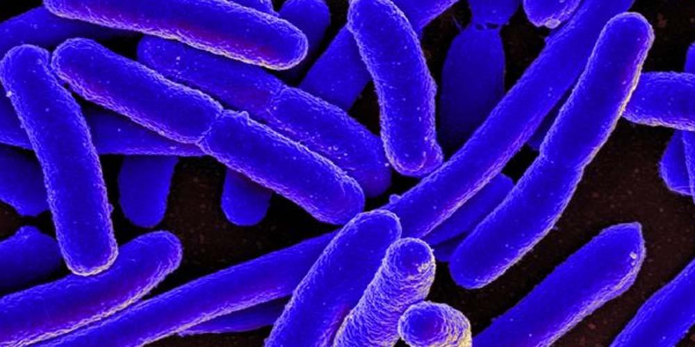 Обычные бактерии превращают пластик в ванилин